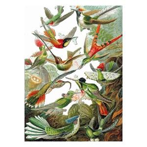 "Puzzle Michele Wilson (A539-500) - Ernst Haeckel: ""Colibris"" - 500 piezas"