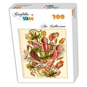 """Grafika Kids (00307) - Ernst Haeckel: """"Kunstformen der Natur, Nepenthaceae, 1904"""" - 300 piezas"""