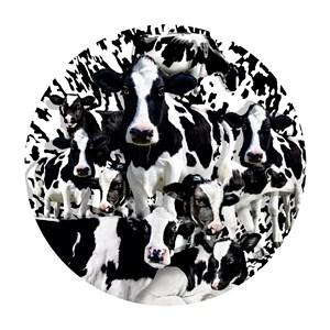 "SunsOut (35102) - Lori Schory: ""Herd of Cows"" - 1000 piezas"
