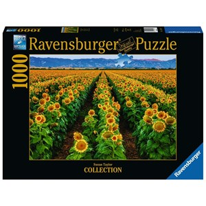 "Ravensburger (15288) - Susan Taylor: ""Field of Sunflowers"" - 1000 piezas"