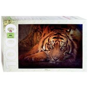 "Step Puzzle (79142) - ""Siberian tiger"" - 1000 piezas"