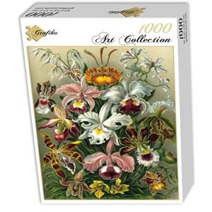 """Grafika (00617) - Ernst Haeckel: """"Kunstformen der Natur, Orchidae, 1904"""" - 1000 piezas"""