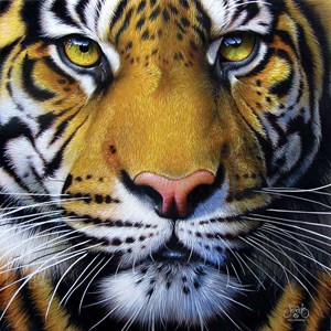 "SunsOut (58628) - JQ Licensing: ""Golden Tiger Face"" - 1000 piezas"