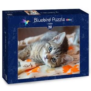 """Bluebird Puzzle (70368) - """"Kitten"""" - 260 piezas"""