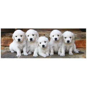 "Dino (39324) - ""Puppies"" - 150 piezas"