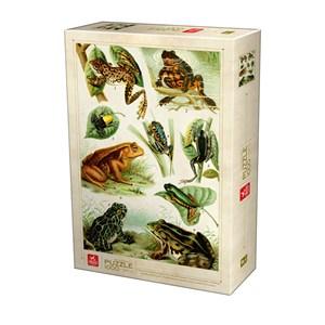 """Deico (75703) - """"Frogs"""" - 1000 piezas"""
