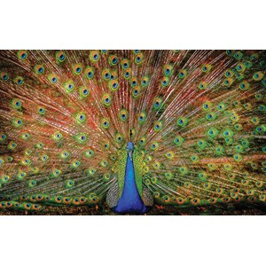 "SunsOut (37352) - Celebrate Life Gallery: ""The Big Boy"" - 1000 piezas"
